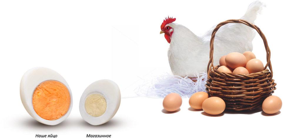 Яйцо магазинное и домашнее